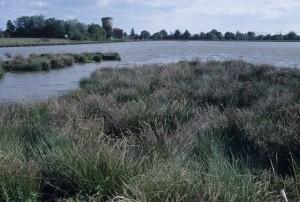 Un étang change au fil du temps