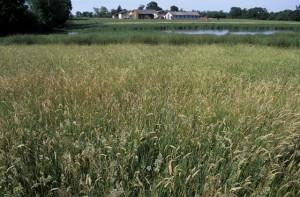 Une prairie en bordure d'étang et les bâtiments de l'exploitation en arrière-plan