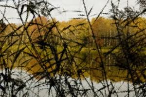 Ambiance impressionniste en bord d'étang