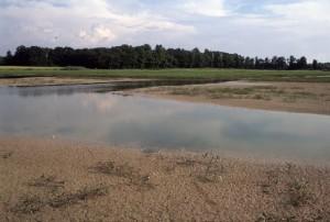Vasière estivale sur un étang